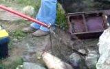 aynalı sazan balığı avı