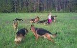 Minik Kız İle 14 Alman Kurt Köpeğinin Oyunu