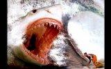 Köpek Balıklarının Babası Megalodon