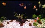 Akvaryum içindeki balıklar :)