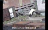 Rusyada Kutup Ayısı Kadına Saldırdı