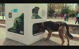 Sokak Hayvanları İçin Üretilmiş Geri Dönüşüm Kutusu