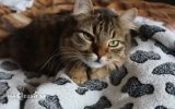 Bebeğe Masaj Yapan Kedi