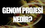 Genom Projesi Nedir? - Tek Cümlede Evrim