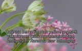 Ağlatan Meryem Suresi Kuran Ancak Bu Kadar Güzel Okunur