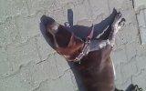 Sinop. Erfelek Belediyesinin Köpeklere Yaptığı Acımasızlık