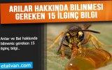 Arılar Ve Bal Hakkında Bilmeniz Gereken 15 İlginç Bilgi