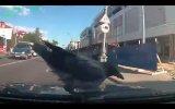 Rus Şoförü Trolleyen Karga