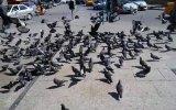 Kadiköy Hasanpaşa Da Güvercinler