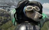 Wingsuit Uçusu Yapan İlk Köpek
